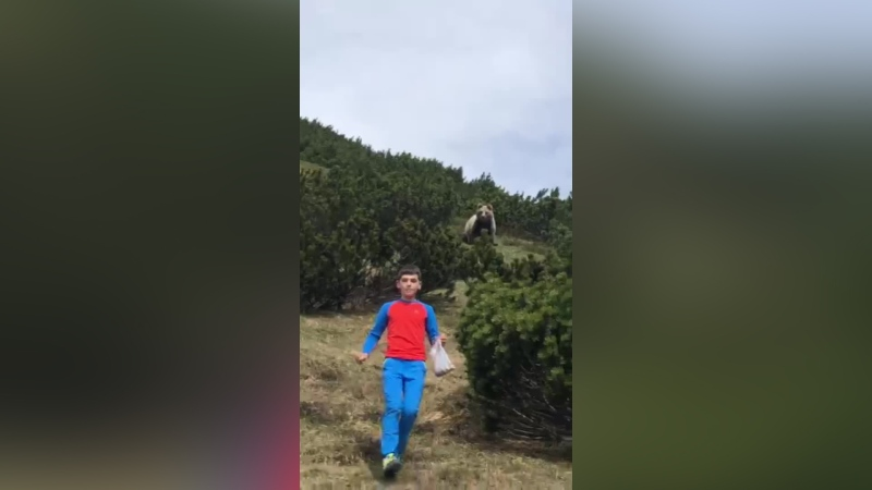 The family thinks the bear could have been disturbed by the boy who was collecting pine cones from the nearby bushes. (Loris Calliari)