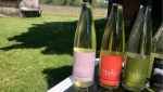 By Chadsey's Caines Winery in Prince Edward County is hoping to open during the COVID-19 pandemic. (Kimberley Johnson/CTV News Ottawa)