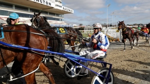 Drivers return their horses to the stables after their race at the Addington Raceway in Christchurch, New Zealand, Thursday, May 28, 2020 in Christchurch, New Zealand, Thursday, May 28, 2020. (AP Photo/Mark Baker)