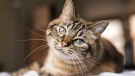 A cat is seen in an image from Shutterstock.com.