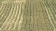 Dry weather good for seeding progress
