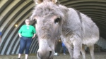 Sask. sanctuary saving ponies and donkeys