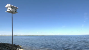 High waters at Alberta Beach.