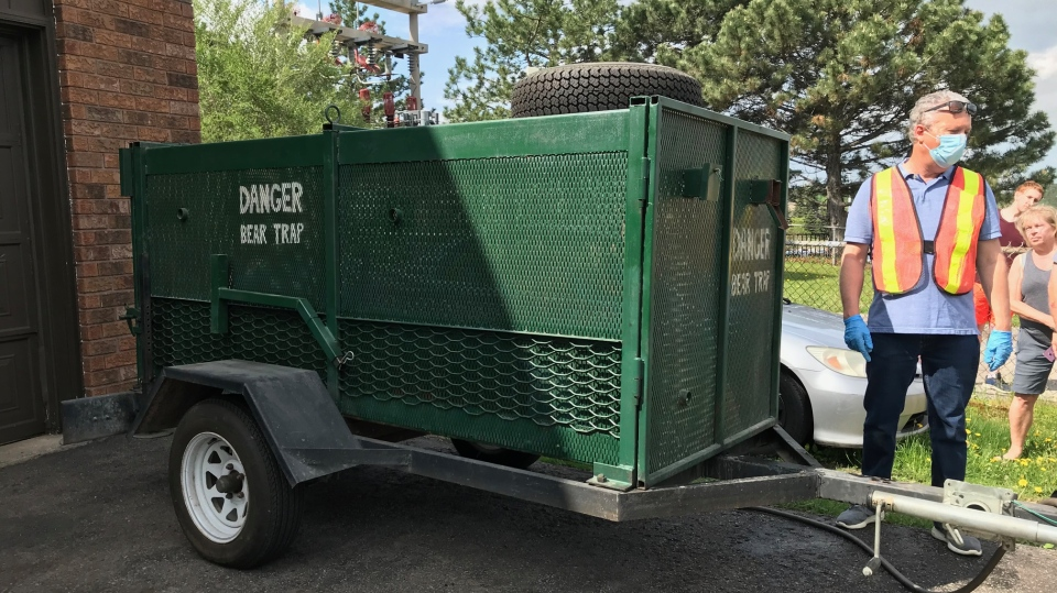 Barrie Police tranquilized a black bear spotted roaming around the south end of Barrie, Ont., on Fri., May 29, 2020. (Rob Cooper/CTV News)