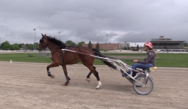Ontario harness racing
