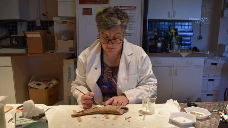 Dee Stubbs-Lee is the long-time conservator  at the New Brunswick Museum. (Courtesy: New Brunswick Museum/Facebook)
