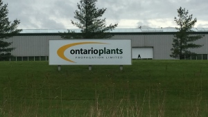 Ontario Plants Propagation near St. Thomas Ont. on May 29, 2020. (Bryan Bicknell/CTV London)