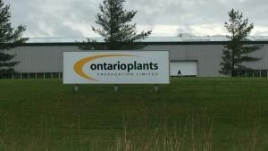 Ontario Plants Propagation near St. Thomas Ont. on May 29, 2020. (Bryan Bicknell/CTV London)