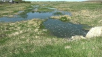 Farmer frustrated with lagoon runoff on property