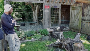 The North Island Wildlife Recovery Centre (NIWRA) will reopen its doors to the public starting Tuesday, June 2. (CTV)
