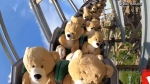 22 over sized teddy bears ride a roller coaster
