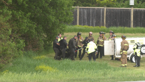 A bear was tranquilized after spending the afternoon in a tree along Terry Fox Drive. (Bryan McNab/CTV News Ottawa)