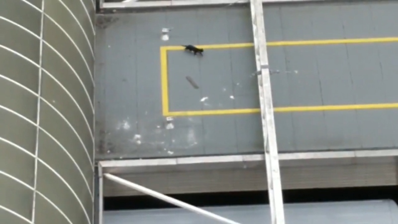 Curious cat lured off skytrain station roof