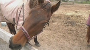 Help for local equestrian school