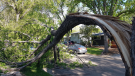 A tree limb snapped from strong wind gusts, according to Twitter user @rhubarbtime65. (Courtesy: Twitter/@rhubarbtime65)