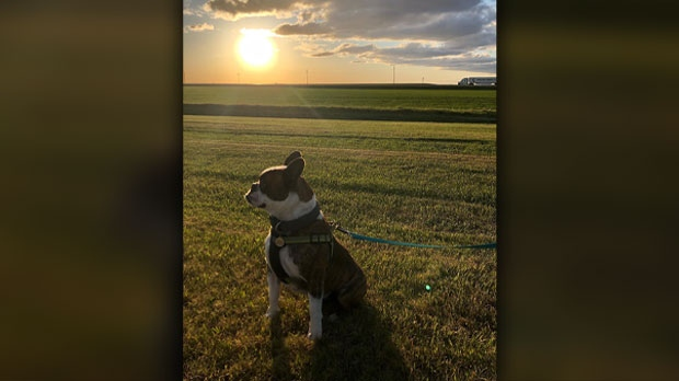 Monty enjoying the prairie sun. Photo by Michelle Burgess.