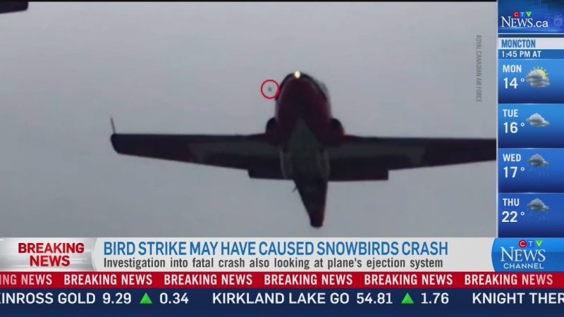 Bird may have caused Snowbirds crash