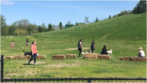 Mississauga residents are seen here enjoying the reopening of an off-leash dog park that has been closed for months due to COVID-19. (CTV News Toronto/Mike Walker)