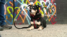 Metro Pet speaks about caring for your pet's heart health