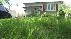 grass lawn mow weeds house yard