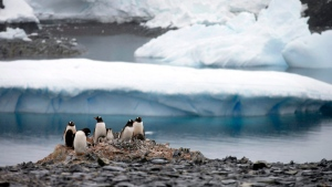 Gentoo penguins stand on rocks near the Chilean station Bernardo O'Higgins, Antarctica, on Jan. 22, 2015. (Natacha Pisarenko / AP)