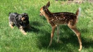 Max meets a new friend. Photo by Glen Gordon.