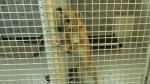 Sudbury animal shelter notices surge in adoptions