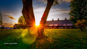 Sunburst through the trees at the Experimental Farm in Ottawa. (Andy Wade/CTV Viewer)