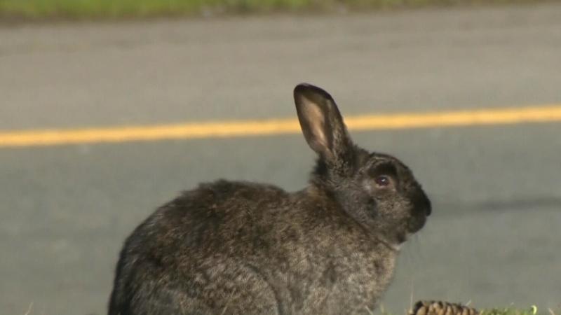 Bunny boom in Winnipeg