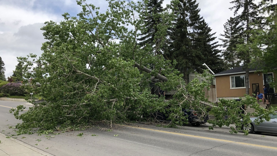 A Calgary man says he was inside his home when he heard a huge noise outside. When he went out to check, he found a huge tree lying on top of his truck.