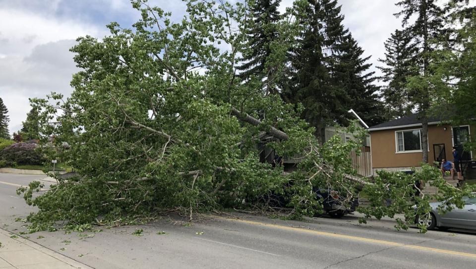 calgary, tree, truck, insurance