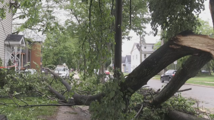 Fredericton Storm knocks down trees