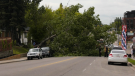 Marda Loop tree fall