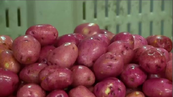 A dramatic drop in demand means farmers in the Maritimes now have millions of pounds of potatoes sitting in storage -- potatoes that should be at a processors being turned into french fries and hash browns.