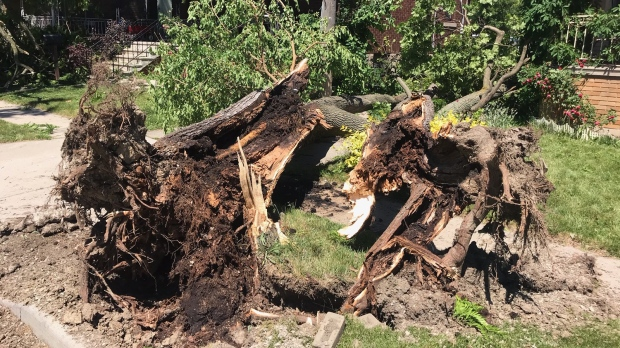 The aftermath of a powerful storm that swept through Windsor, Ont., Thursday, June 11, 2020. (Sijia Liu / CTV Windsor)