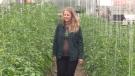 Tamara McMullen of Firmly Rooted Farm near Belgrave, Ont. (Scott Miller / CTV London)