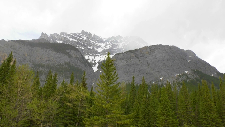 Alberta RCMP said seven tickets for $1,200 were given to American tourists who were found in Banff last week.