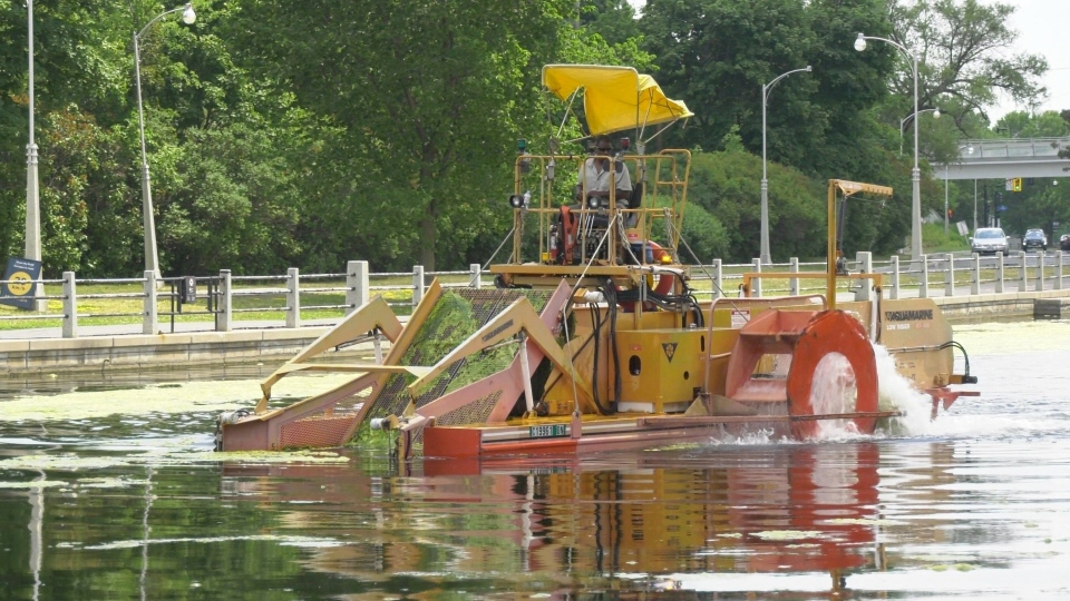 A weed harvester collects foliage and algae from the surface of the Rideau Canal June 22, 2020. (Dave Charbonneau / CTV News Ottawa)