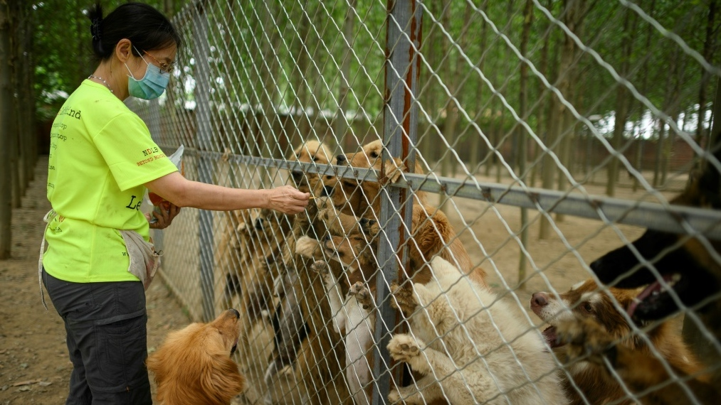 Dogs in China