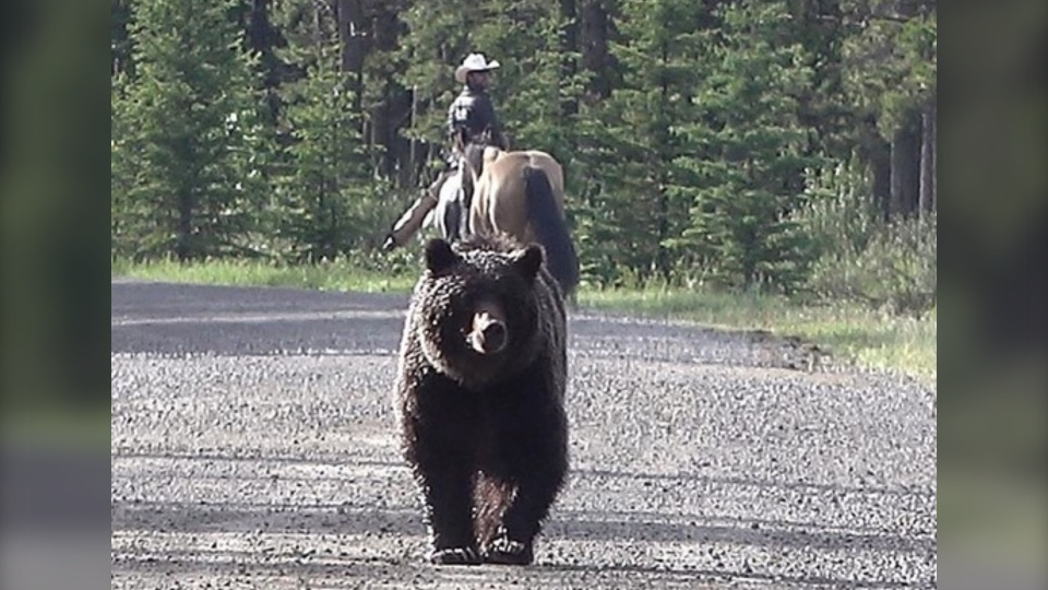Filipe Masetti Leite posted a series of photos to social media after encountering a young bear northwest of Calgary. (Instagram/Filipe Masetti Leite)