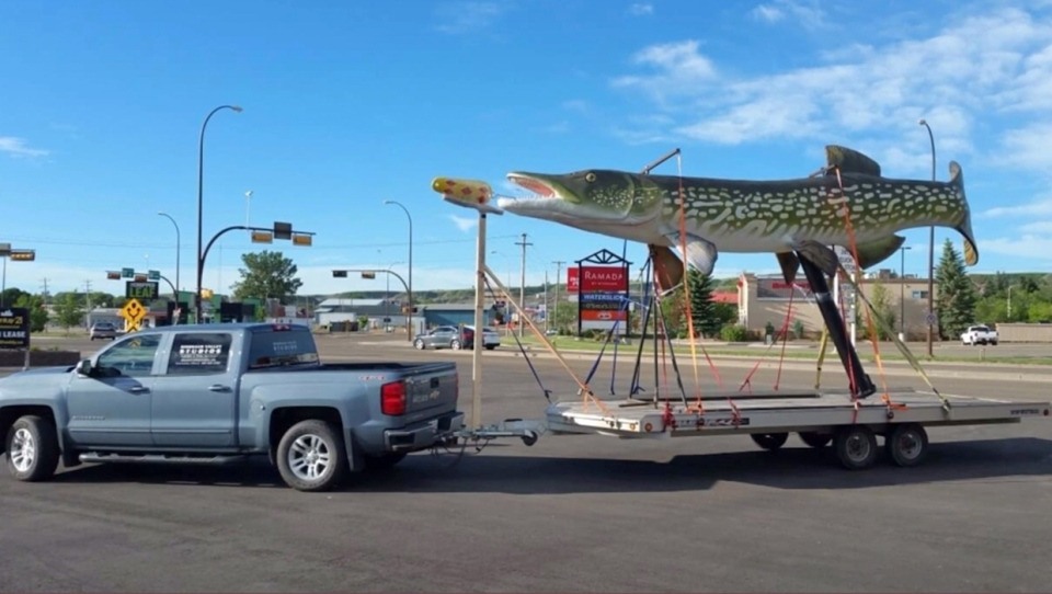 The northern pike jackfish sculpture on a trailer in Drumheller ahead of its drive to Rochon Sands (Frank Hadfield)