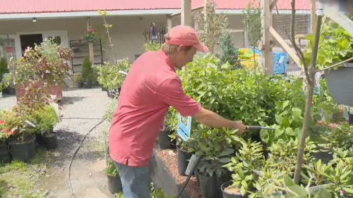 Withrow's Farm Market manager watering plants