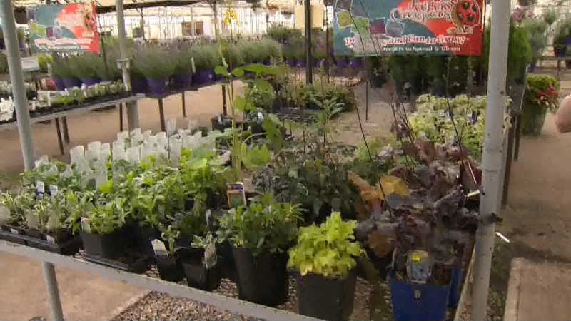 It's not too late to add special perennials to your outdoor spaces. We talk to the experts at Golden Acre Home and Garden