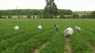 Calls for temporary agri-farm shutdown