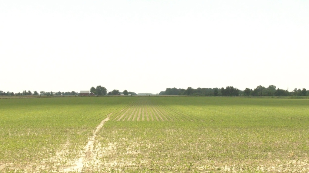 Farm Leamington
