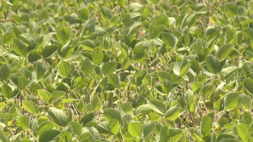 Essex County farm crops