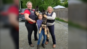 Three stolen show puppies were found abandoned in Aldergrove. (Woodside German Shepherds / Facebook)