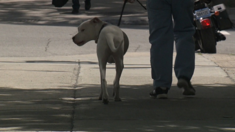 Dog involved in fatal attack euthanized