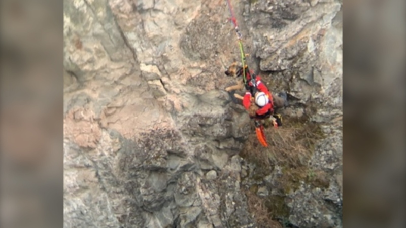 A German shepherd was rescued with a rope after getting trapped in a canyon near Penticton on June 29, 2020.