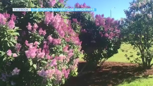 In this gardening segment,Tony Ryma speaks with Jade Scognamillo of the North Bay Heritage Gardeners about the city's waterfront pollinators